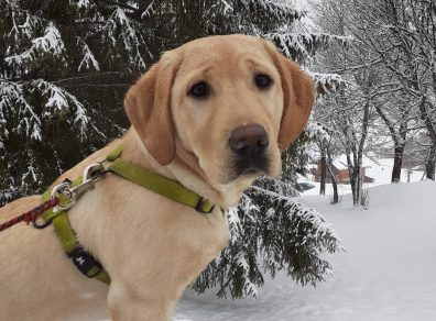 Pretty dans la neige