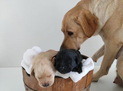 Nola-et-ses-bébés