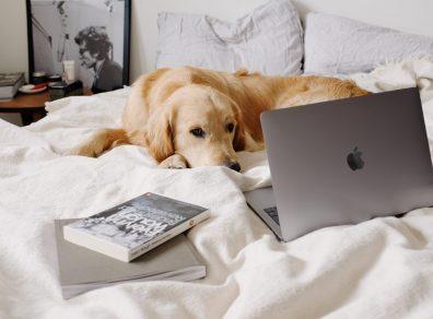 chien-devant-un-ordinateur