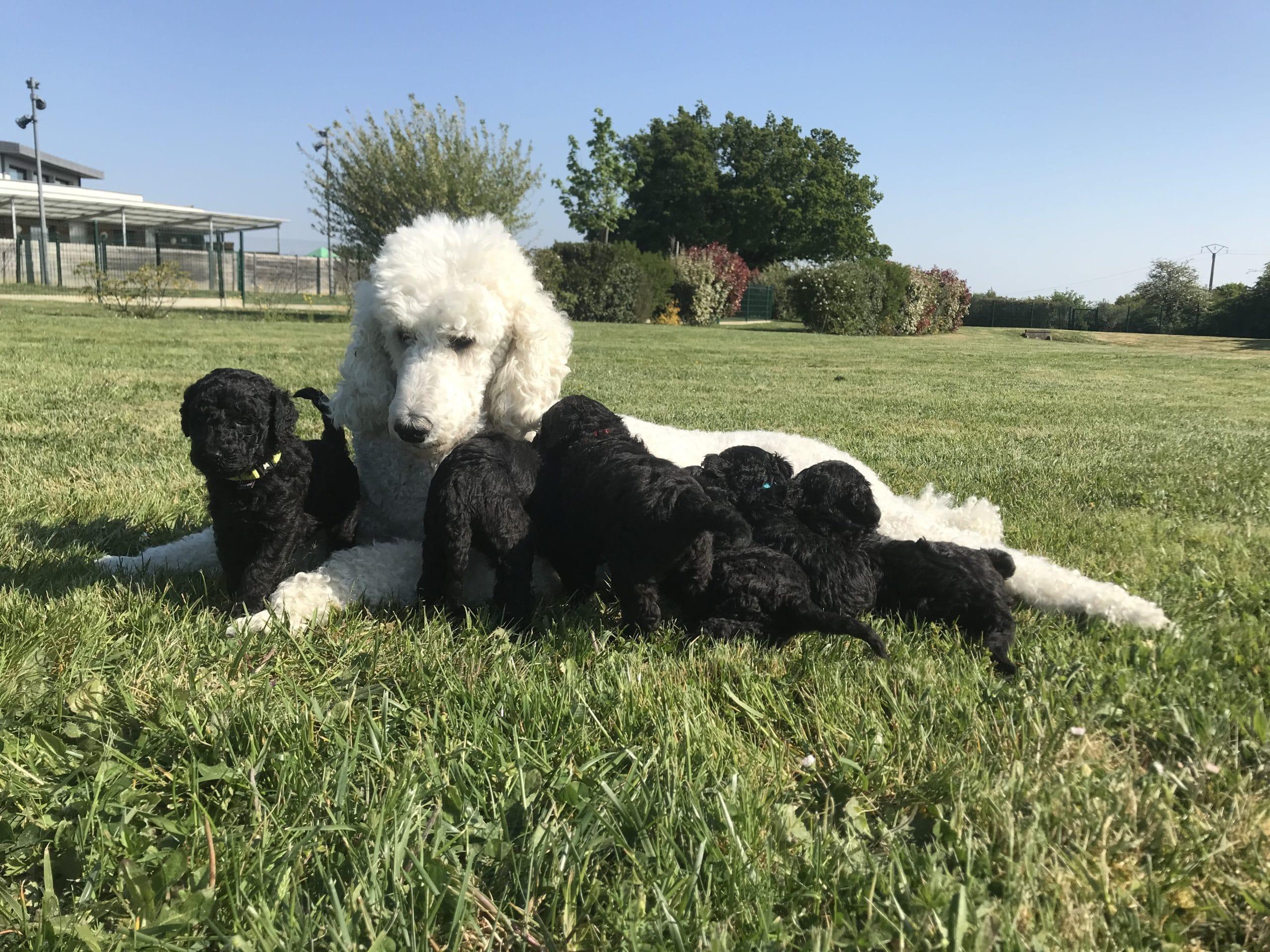 Lancome et ses bébés