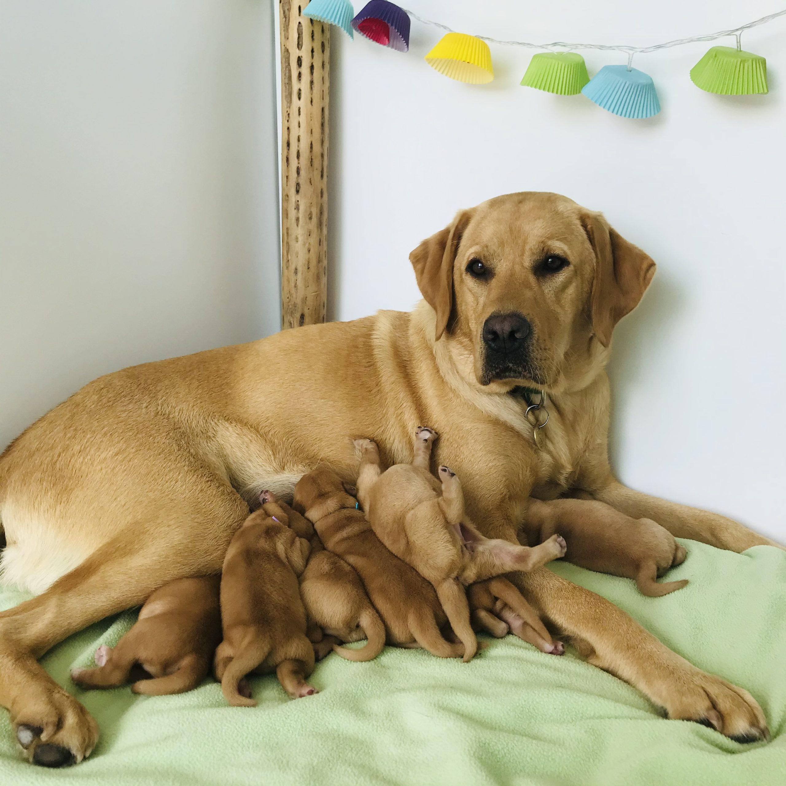 Rébus et ses bébés_1