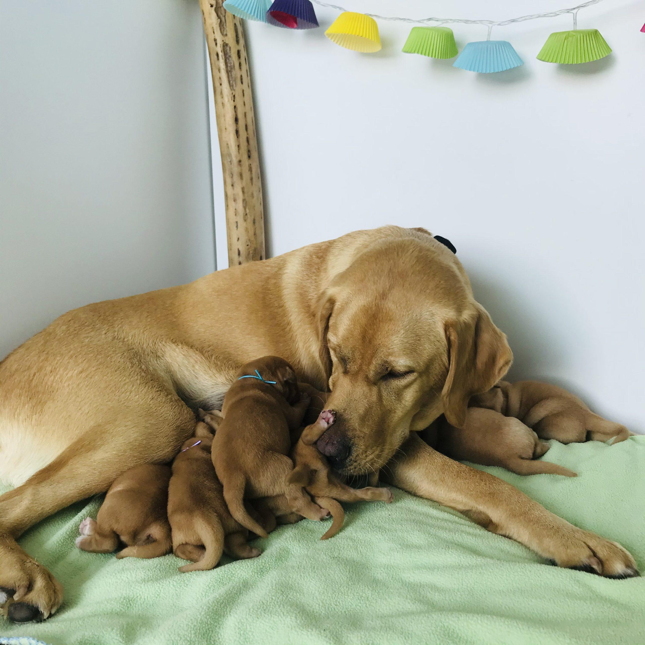 Rébus et ses bébés_3